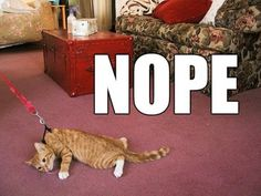 not doing it.  really great example of why it's not okay to put cats on leashes. ever.