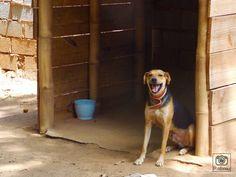 Fotografia, cão, animais.  Por: Patrícia Abreu