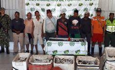 fortalecemos acciones para proteger el medio ambiente - Categoria: Actualidad  ND: Capturadas ocho personas que estaban involucrados en actividades de pesca ilegal.En cumplimiento con la ofensiva nacional contra el crimen ordenado por el Presidente de la RepAblica y la DirecciAn General de la PolicAa Nacional de todos los Colombianos, hemos logrA la captura de ocho personas dedicadas a la pesca ilegal y el decomiso de 165 kilos de pescado y una pistola.Mediante el uso de la informaciAn…
