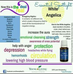 YL Essential Oils uses for White Angelica oil