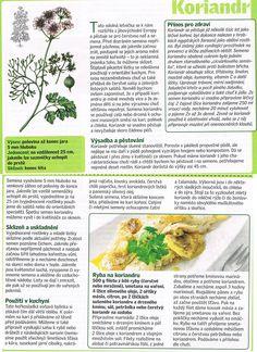 - My Secret Garden, Korn, Cantaloupe, Spices, Health Fitness, Herbs, Fruit, Gardening, Diet