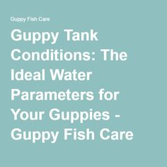 Guppy Tank Conditions: The Ideal Water Parameters for Your Guppies - Guppy Fish Care