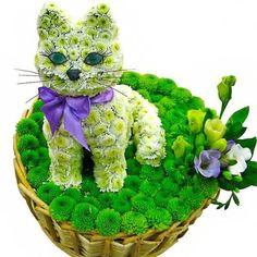 fresh flower kitty loveliegreenie