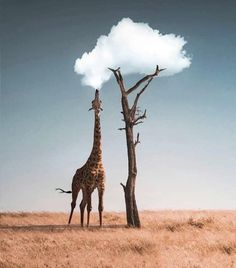 A giraffe vaping All About Animals, Like Animals, Cute Baby Animals, Cutest Animals, Animals Tattoo, Vape Sale, Surreal Artwork, Image Nature, Montage Photo