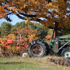 Do you think Fall Setting deserves to win the Steiner Tractor Parts Photo Contest?  Have your say and vote today for your favorite antique tractor photos!