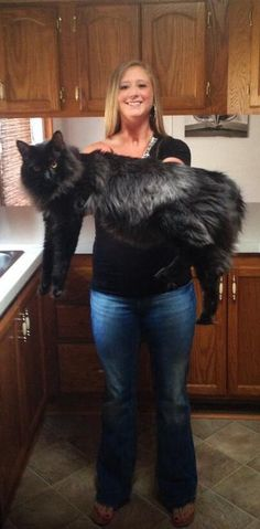 Beautiful black Coonie. I hope mine gets this big!