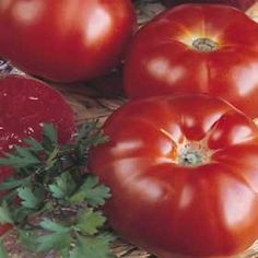 Quality vegetable seeds from around the world. Largest select of heirloom tomato seeds and vegetable plants. Come and see what I seeds we have to offer. Herb Seeds, Garden Seeds, Planting Seeds, Heirloom Tomato Seeds, Heirloom Tomatoes, Ficus, Growing Tomatoes, Growing Vegetables, Fresco