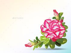 Buy Desert Rose Background by narinbg on GraphicRiver. Background and label decorated with desert rose Desert Flowers, Desert Rose, Floral Flowers, Desert Drawing, Rose Sketch, Patterns In Nature, Nature Pattern, Cactus Shirt, Rose Background