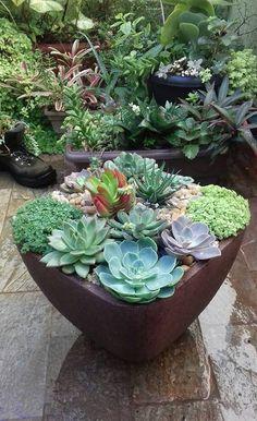 Ainda não tem Jardins em Vasos?   Transforme sua casa, loja ou escritório em um ambiente mais alegre e harmônico. Você se surpreenderá com os resultados pois jardins transmitem calma, revigoramento, serenidade e são até mesmo terapêuticos.   Nós montamos para você lindos Jardins em Vasos. Peça um orçamento. Contato: marcia.nassrallah@gmail.com  #jardinsemvasos #studiomsdesign #suculentas #suculents #cactos #cactus #xerófitas  #flowers #flores #minijardim #minigarden #garden #pequenosespaços