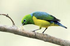 Portfólio Jarbas Mattos | Brasil das Aves