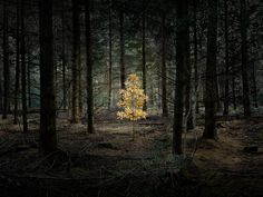 These Enchanting Forest Photograhs Capture the Mythical Power of Nature and Our Relationship with it
