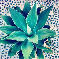 plants and polka dots