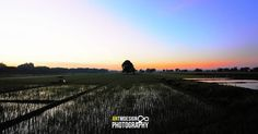 5am sunrise over the rice fields. #sunrise # ricefields #moncada #philippines #landscapephotography