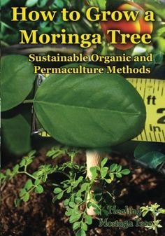 How to grow a Moringa tree: Sustainable organic and permaculture methods by Cornelius Epps II http://www.amazon.com/dp/1505848709/ref=cm_sw_r_pi_dp_hR3Pub1JF6EWR