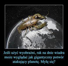 Jeśli użyć wyobraźni, rak na dnie wiadra może wyglądać jak gigantyczny potwór atakujący planetę. Mylę się? –