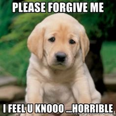 Add a bit of humor to apologizing with this adorable and funny I'm sorry meme collection. Im Sorry Meme, Sorry Quotes, Forgive Me Meme, I Want You Meme, Puppy Meme, Cute Dog Memes, Apologizing Quotes, Miss My Best Friend, Sorry My Love