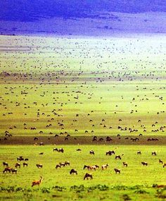 Serengeti National Park, Tanzania. UNESCO World Heritage Site.