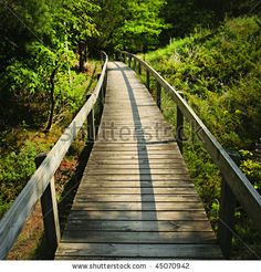 CANADA | Wooden path through forest | Pinery Provincial Park, Ontario