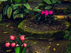 Flores 3 | por osoriotrujillo