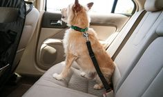 Car Seat Clip for Pets | Groupon