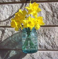 Beautiful daffodils in a blue mason jar.