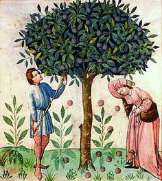 Medieval Food: In northern Europe, the most common fruits were: strawberry, apple and pear. In the south, grapes, figs and oranges.The rich used them to get a bittersweet taste in savory dishes. The poor eat the fruit directly from the tree, without even washing it.