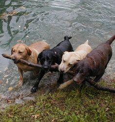 ich liebe Hunde!!