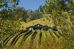 Black Barn Vineyards is a small exclusive vineyard in Hawkes Bay New Zealand. It specialises in high quality estate grown wines, luxury accommodation, lunches, concerts and small functions all on a spectacular vineyard site with superb views.