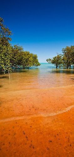 Blue Sky, Red Sand by aabzimaging.  Mangroves at Roebuck Bay in Broome, Western Australia #australiaphotos