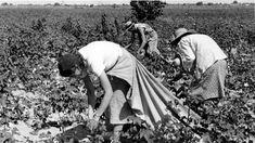 "ROMANIA – ITALY: The Romanian ""slaves"" behind the Sicilian tomatoes"