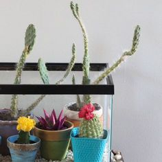 Dust off the old fish tank in storage and reuse it as a chic terrarium for your cacti and succulents. Just fill the tank with decorative stones, add colorful flowerpots and carefully drop in a collection of cactus plants. We'll show you how.