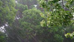Will it rain for 40 days?