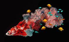 Lisa Ericson lässt Fische und ihre Umwelt verschmelzen  Ein schwarzer Hintergrund, darauf leuchtende Farben, die surreal anmuten, aber realistischer nicht sein könnten – Lisa Ericson hat in ihrer neues...