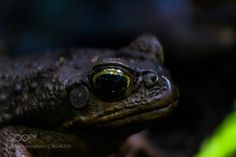 Black eyes by firedowngrade #nature #photooftheday #amazing #picoftheday