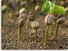 Benih Sayuran, Benih Sawi, Benih Seribuan, Benih Sayuran Dataran Rendah, Benih Sayur, Benih Sayuran Unggul, Benih Sayuran Organik, Benih Sayuran Murah, Benih Sayuran Impor, Benih Sayuran Import, Benih Sayuran Eceran, Benih Cabe, Benih Cabe Rawit, Benih Cabe Rawit Unggul, Benih Cabe Rawit Terbaik, Benih Kubis Dataran Rendah, Benih Kubis, Benih Kubis Unggul, Benih Seledri Unggul, Benih Sawi Unggul, Benih Seledri, Benih Sawi Hijau,