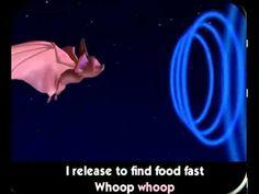 Bat Echolocation Song