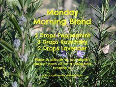 Happy Monday! Is it just me or did this past weekend just fly by?! Mondays always seem to require a bit of extra focus for me to when I am getting started. So this morning I've got my Monday Morning Blend in the diffuser. MMMMM PS You can use either Rosemary ct camphor or Rosemary ct verbenone in this blend. Both work well)