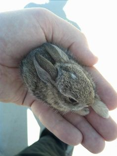 teeny tiny bunny