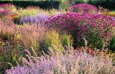 Rambulation : 'Dutch Wave' garden plants for the Piet Oudolf look, suggested by the Daily Telegraph. Books and gardens.