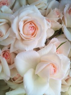 """""""Sweetheart Roses"""" delicate treasures ~ my fav color roses, have some next to me right now"""