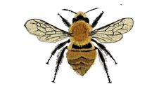 the illustrated bee