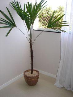 Conheça mais de vinte opções de plantas lindas e fáceis de cultivar, perfeitas para apartamentos ou casas e ambientes pequenos.