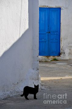 One Hot Summer Afternoon - I encountered this black cat while wondering in the quiet streets of a village one hot summer afternoon.   Photo taken in the village of Maritsa, Rhodes, Greece