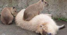 http://ift.tt/2mCK0nZ Just Pinned to Animals: http://ift.tt/2oIQcfh
