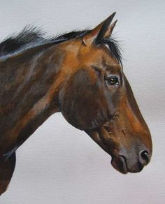 Horse Portraits by Pauline Gledhill ... drawing using watercolors