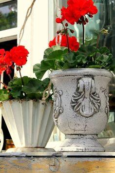 Summer Geraniums Love the pots Garden Urns, Garden Shrubs, Garden Planters, Container Plants, Container Gardening, Plant Containers, Flower Containers, Beautiful Flower Arrangements, Beautiful Flowers