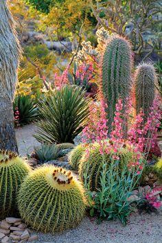 Cactus and succulent garden desert landscape 56 Best Ideas Succulent Landscaping, Tropical Landscaping, Backyard Landscaping, Landscaping Edging, Landscaping Ideas, Dessert Landscaping, Backyard Trees, Lawn Edging, Gardens