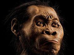 So könnte die Frühmenschenart Homo naledi laut einer Rekonstruktion anhand von Knochenfunden in einer südafrikanischen Höhle ausgesehen haben. .