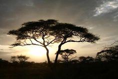 Serengeti, Africa #nifty