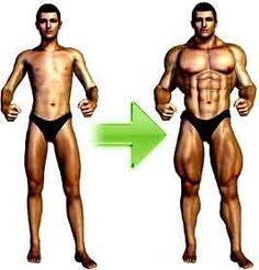 Comment grossir? Découvrez vite nos 3 programmes de musculation pour gagner rapidement du muscle: Tonification, Définition musculaire, Puissance !
